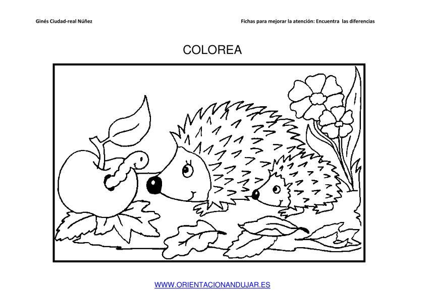 COLOREAMOS DIBUJOS DE ERIZOS IMAGENES02  Orientacin Andjar