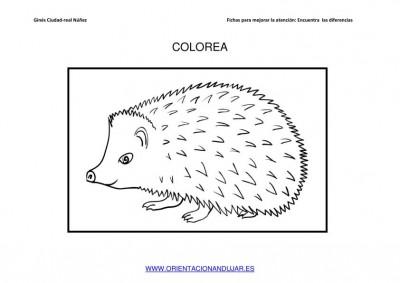 COLOREAMOS DIBUJOS DE ERIZOS IMAGENES_03