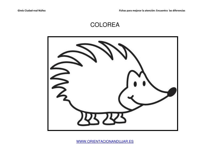 Asombroso Erizo Para Colorear Imprimible Bosquejo - Dibujos Para ...