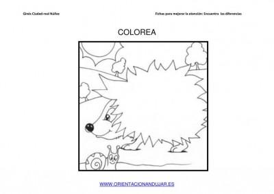 COLOREAMOS DIBUJOS DE ERIZOS IMAGENES_10