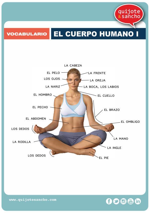 Las partes del cuerpo humano en español - vocabulario, recursos ...