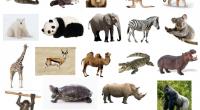 Hoy comparto con vosotros/as un material creado por María Jose De Luis Flores en su blog http://lapsico-goloteca.blogspot.com.es/.. Se trata de una prueba léxico -semántica para evaluar el vocabulario a través […]