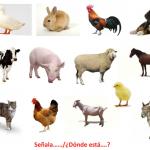 PRUEBA LÉXICO - SEMÁNTICA Los animales domesticos video