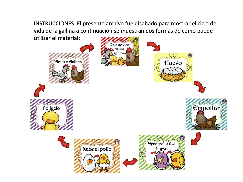 ciclo de vida de la gallina 8 - Orientación Andújar - Recursos