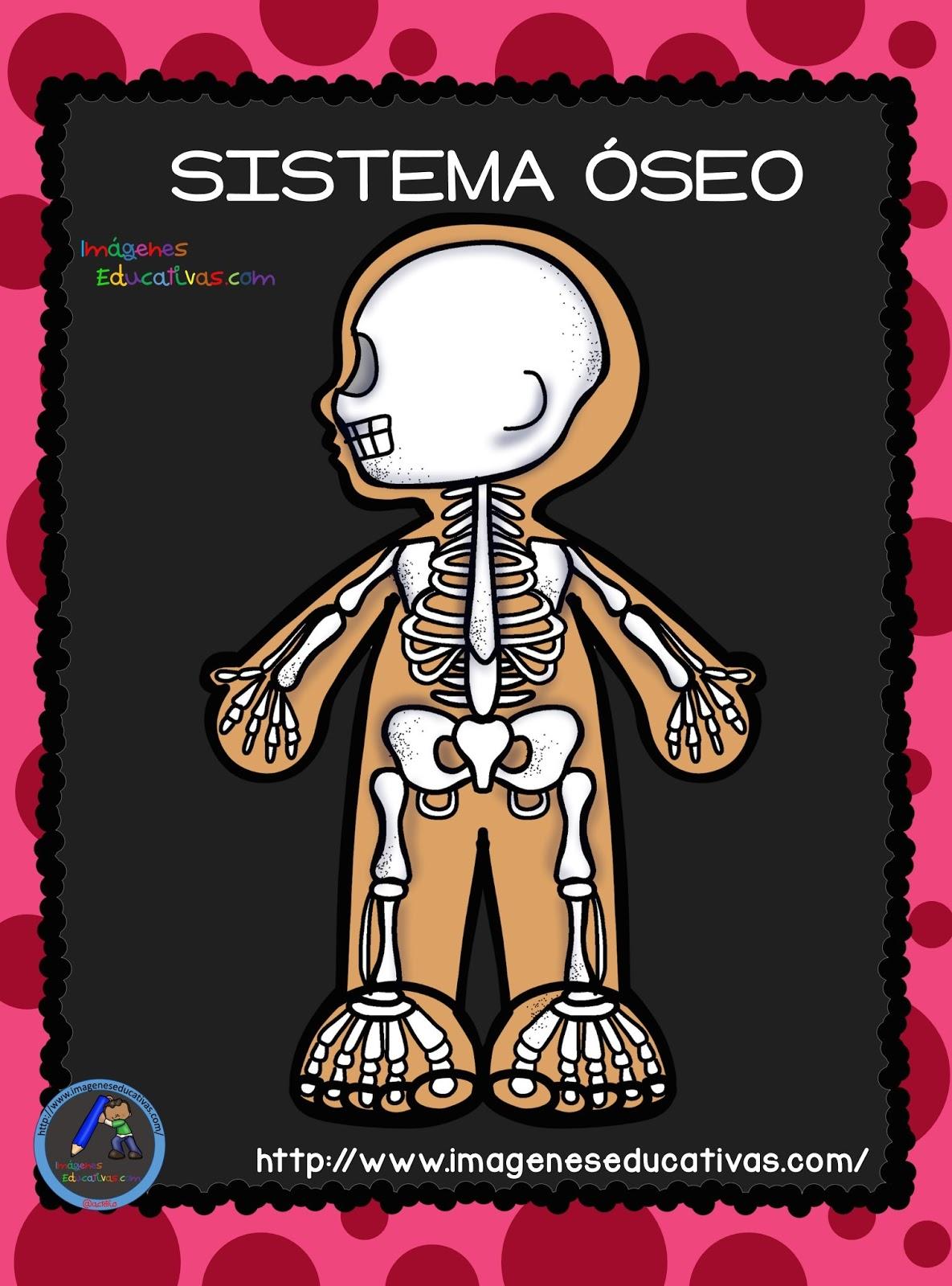El Cuerpo Humano Aparatos y Sistemas para Primaria 2 (1