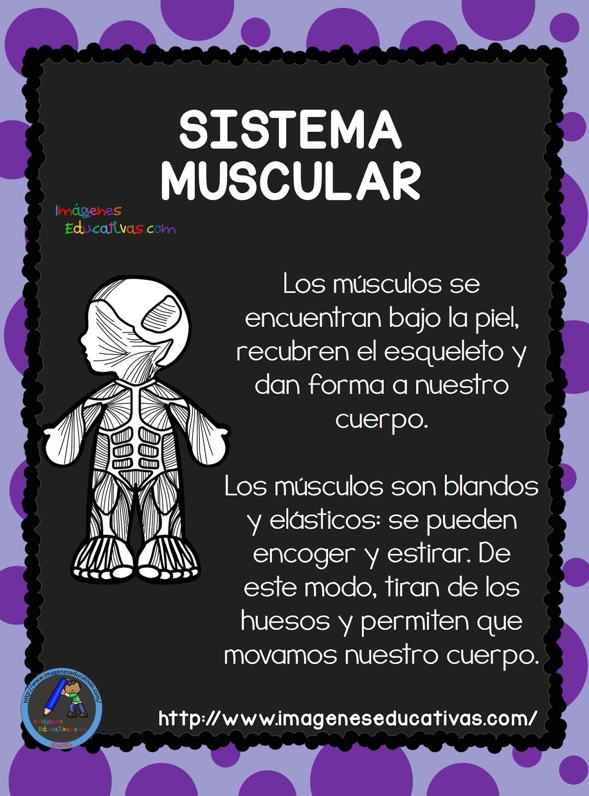 El-Cuerpo-Humano-Aparatos-y-Sistemas-para-Primaria-7 (1 ...